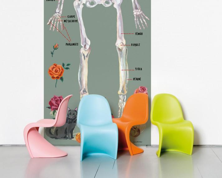 Le squelette humain grey